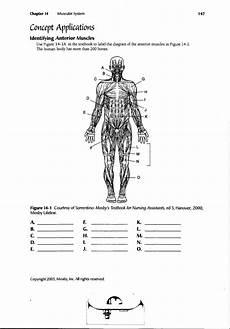 human anatomy labeling worksheets human muscle diagram worksheet human anatomy diagram