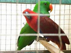 Macha Farm Galeri Gambar Burung