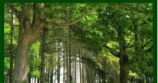 Keren 30 Pemandangan Hutan Rimba Di 2020 Pemandangan