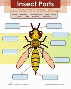 grade 3 science worksheets insects 12532 insect parts worksheet education