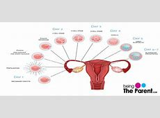 what happens right after implantation