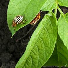 7 natural vegetable garden pest deterrents midwest