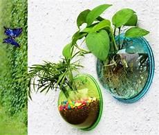 plante aquatique jetez vous 224 l eau en 47 photos