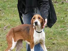 spa poitiers chien sos pour 19 chiens courants spa de poitiers 86