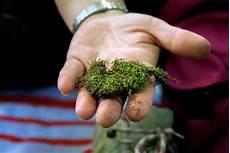 Moos Im Rasen 5 Wirkungsvolle Mittel Zur Bek 228 Mpfung
