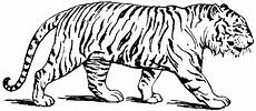 free printable tiger coloring pages for kids animal coloring pages coloring pages to print