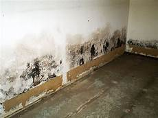 nasse wand trocknen drywall damage drywall mold fixing water mold