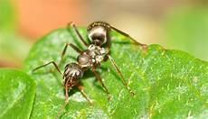 was hilft gegen ameisen im rasen ameisen im rasen bek 228 mpfen so haben sie erfolg