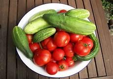 gewächshaus gurken und tomaten gurken auss 228 en und anbauen treibhausgurken und
