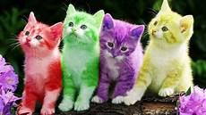 Sombongnya Si Putih Nie Kenali Personaliti Kucing Ikut