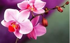 wie oft orchideen gießen wie gie 223 e ich die orchidee richtig