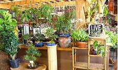indoor gardening for beginners basics you should know