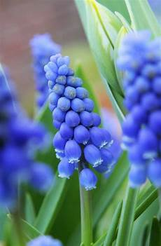Welche Fr 252 Hlingsblumen Bl 252 Hen Wann