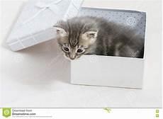 a surpresa gatinho pequeno colou em uma caixa de presente doce animal peluches foto de stock