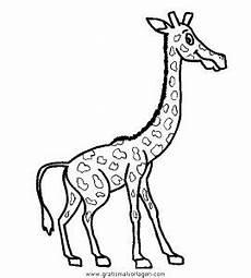 malvorlage giraffe einfach giraffen 28 gratis malvorlage in giraffen tiere ausmalen