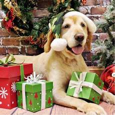 752 best christmas and animals images pinterest christmas animals christmas time and doggies