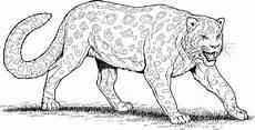 Ausmalbilder Leopard Ausdrucken Kleurplaat Jachtluipaard Ausmalbilder Ausmalbilder