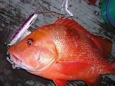 Kaki Pancing Pantang Larang Ikan Merah