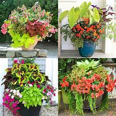 best shade plants 30 gorgeous container garden planting