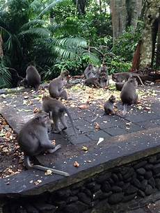Foto Lucu Monyet Indonesia Page