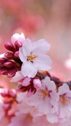 flower wallpaper for note 3 flowers wallpaper flower samsung galaxy note 3 wallpapers