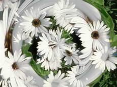 Flower Wallpaper by Desktop Flower Wallpapers Beautiful Flower Wallpapers