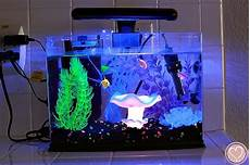 glofish aquarium review everything to know before you buy