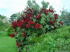 arbuste feuillage persistant l 238 le de br 233 hat c 244 t 233 jardin arbres et arbustes