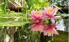 Pflanzen Am Teich Gartenteich Wohnung Einrichten