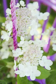welche pflanzen passen zu garden plant of the month for july panicle hydrangea
