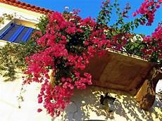 piante fiorite da terrazzo fiori da terrazzo il verde