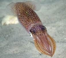 Klasifikasi Dan Ciri Ciri Mollusca Beserta Contoh Flora