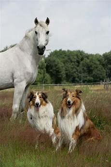 Malvorlage Pferd Und Hund Mensch Trifft Hund Trifft Pferd Ab Freitag In Dortmund