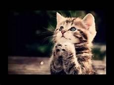 Kumpulan Gambar Kucing Lucu Imut Serta Pesan Singkat