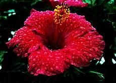 simbolos naturales de valencia estado carabobo s 237 mbolos naturales del estado carabobo