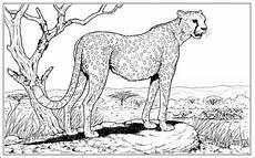 ausmalbilder zum ausdrucken ausmalbilder gepard kostenlos