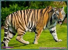 Nama Binatang Dari Huruf H Nama Gambar Binatang A Z