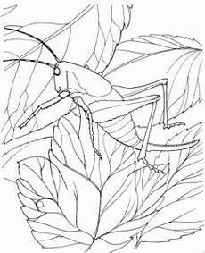 grashuepfer auf einem blatt ausmalbild malvorlage tiere