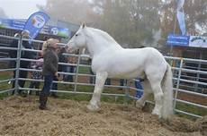 Tamme Hanken Pferd - nachrichten brockum tamme hanken autogramme f 252 r einen