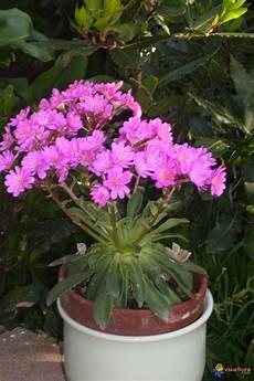 Photo Plante Grasse Fleurit En Avril