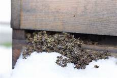 sterben bienen im winter der winter ist zur 252 ck imkerei mordhorst