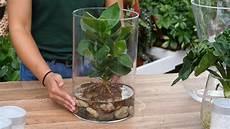 hydroponie die pflanze im glas gartencenter mencke