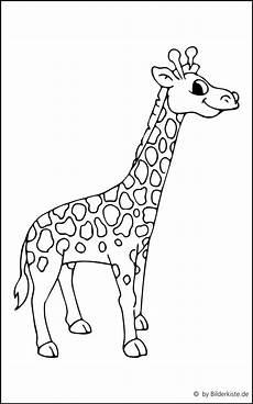 Malvorlagen Kostenlos Giraffe Ausmalbilder Giraffe Kostenlos 1037 Malvorlage Malvorlagen