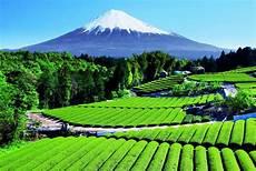 Pemandangan Gunung Di Indonesia Dengan Golden