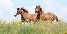 die idee wohnen mit pferden in schermbeck