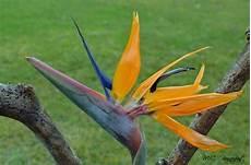 bec de perroquet beak of parrot fleurs flowers
