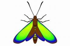 papillon en allemand sur un papillon fossile des couleurs vieilles de 47
