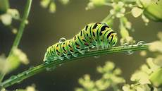 Insect Caterpillar Wallpaper by Painting Of A Caterpillar Hd Wallpaper Background Image