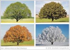vier jahreszeiten foto bild pflanzen pilze flechten