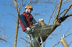 devis elagage arbre obligations et tarifs 233 lagage des arbres